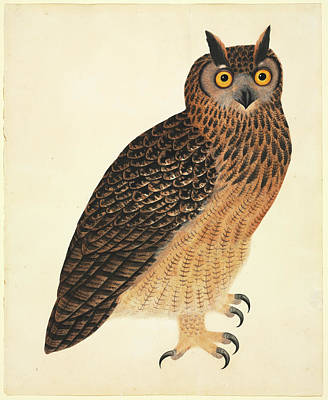 Orange Photograph - Eurasian Eagle-owl by Natural History Museum, London