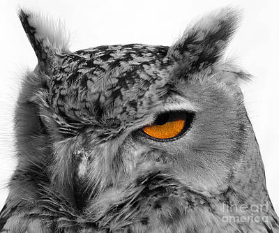 Eurasian Eagle Owl Art Print by Skip Willits