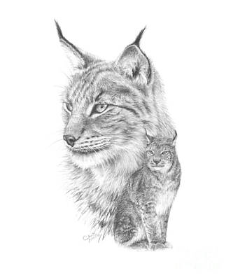 Drawing - Eurasian lynx by Chris Mosley