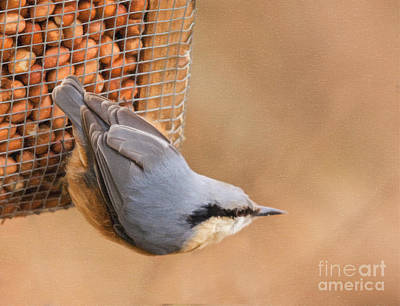 Digital Art - Eurasian Nuthatch by Liz Leyden