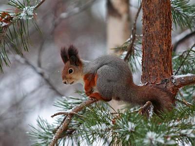 Target Threshold Photography - Eurasian red squirrel by Jouko Lehto