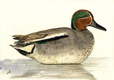 Teal Wall Art - Painting - Eurasian Teal by Juan  Bosco