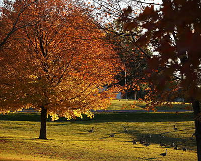 Photograph - Eureka Lake Fall Tree With Geese by Coby Cooper