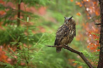Eagle Photograph - Euroasian Eagle Owl by Milan Zygmunt