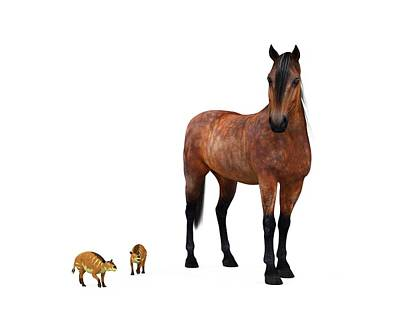 Eurohippus And Modern Horse Art Print by Walter Myers