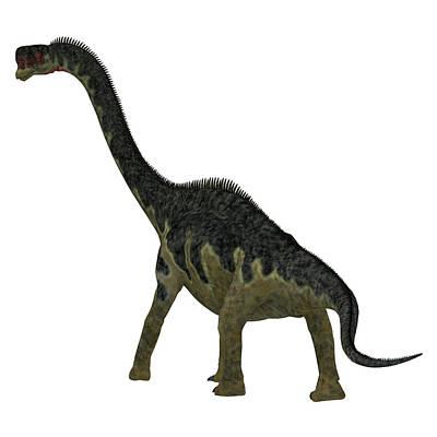 Photograph - Europasaurus Dinosaur, Rear View by Corey Ford