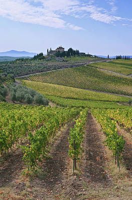 Europe, Italy, Tuscany, Chianti Art Print by Rob Tilley