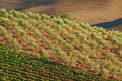 Europe, Italy, Tuscany, Vineyard Art Print by Terry Eggers