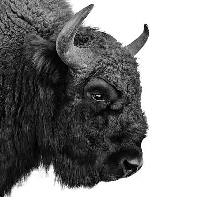 Photograph - European Bison by Floriana