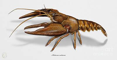 European Crayfish Astacus Astacus - Flusskrebs - Ecrevisse A Pattes Rouges - Jokirapu Art Print by Urft Valley Art