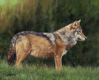 Painting - European Grey Wolf by David Stribbling