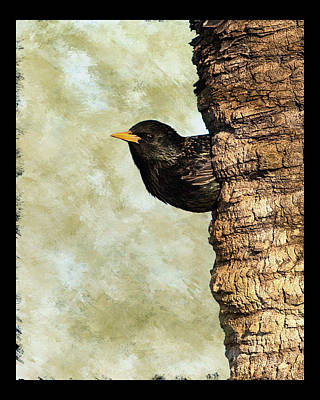 Photograph - European Starling II by Dawn Currie