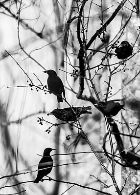 Photograph - European Starlings by Brad Marzolf Photography