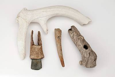 Toggle Photograph - European Stone Age Antler Tools by Paul D Stewart