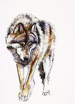 European Wolf Print by Mark Adlington