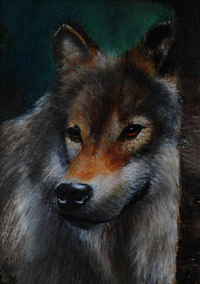 Painting - European Wolf  Miniature  by Lynn Hughes