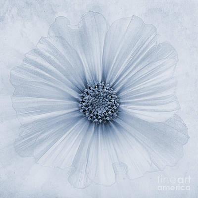 Blooming Digital Art - Evanescent Cyanotype by John Edwards