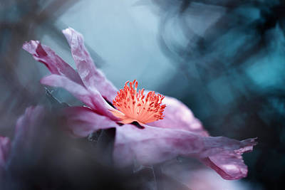 Bokeh Photograph - Even Flowers Have Stories To Tell by Fabien Bravin