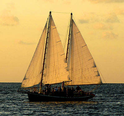Photograph - More Sails In Key West by Bob Slitzan