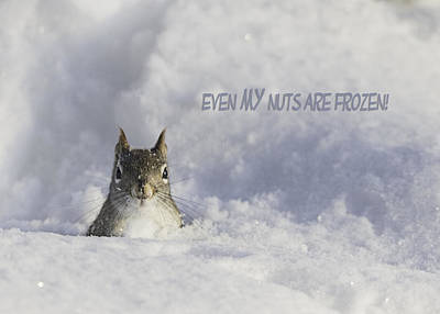 Squirrel Photograph - Even My Nuts Are Frozen by Everet Regal