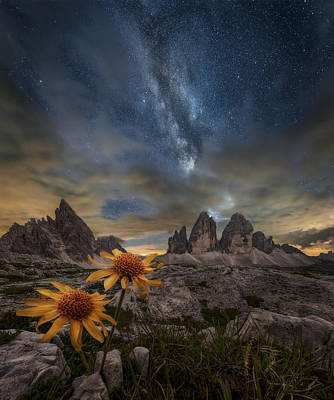 Milky Way Wall Art - Photograph - Even The Flowers Seem To Be Fascinated By The Stars by Alberto Ghizzi Panizza