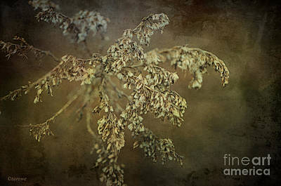 Photograph - Even Weeds Are Beautiful by Terry Rowe