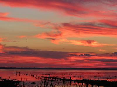 Photograph - Evening Array Of Color by Fortunate Findings Shirley Dickerson