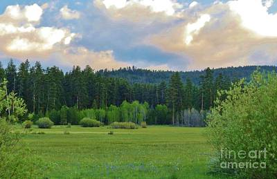 Photograph - High Mountain Meadow by Michele Penner