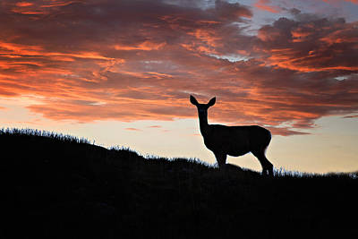 Photograph - Evening Doe Fiery Sky by Lana Trussell