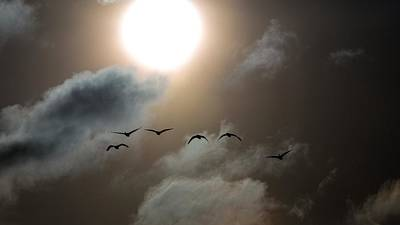 Photograph - Evening Flight by Donald J Gray