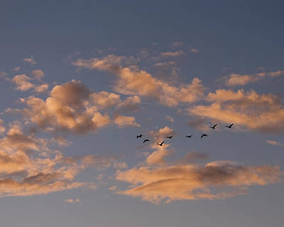 Photograph - Evening Flight by Rhonda McDougall