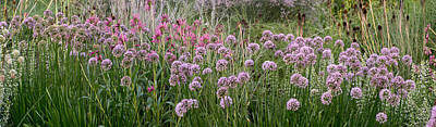 Photograph - Evening Flowers Panorama by Theo OConnor
