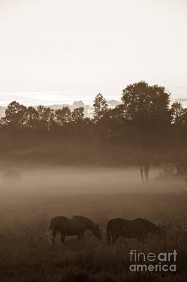 Photograph - Evening Fog by Cheryl Baxter
