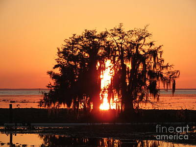 Photograph - Evening Glow by Fortunate Findings Shirley Dickerson