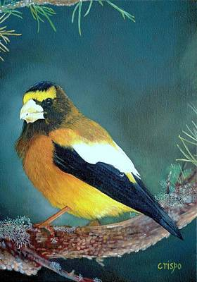 Evening Grosbeak Art Print