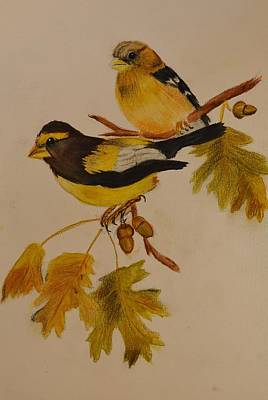 Linda Brown Painting - Evening Grosbeak Songbird by Linda Brown