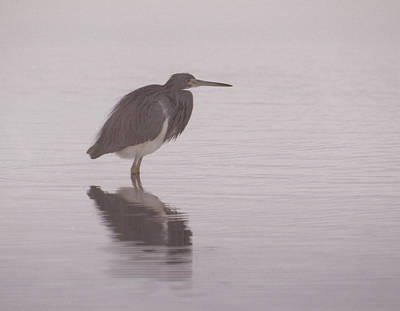 Evening Heron Art Print