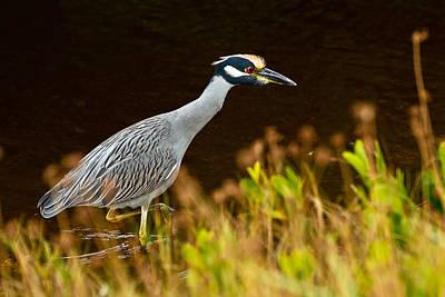 Photograph - Evening Hunt by Ben Graham