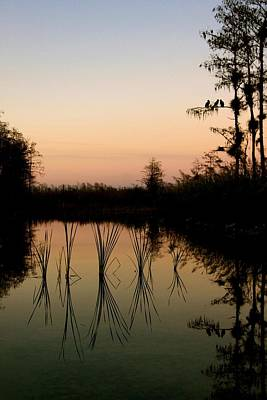Florida Photograph - Evening In The Everglades by AR Annahita