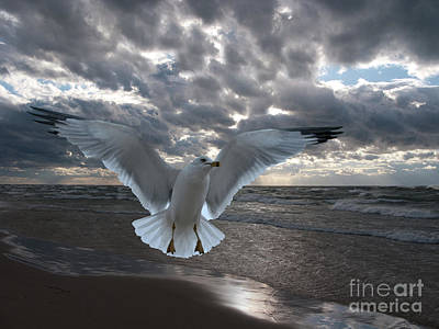 Birds Rights Managed Images - Evening Landing Royalty-Free Image by Ann Horn