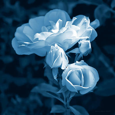 Photograph - Evening Light Blue Roses In The Garden by Jennie Marie Schell