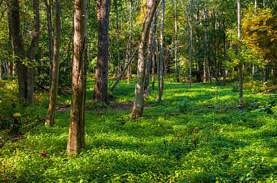 Photograph - Evening Light On Forest Floor by Gene Sherrill