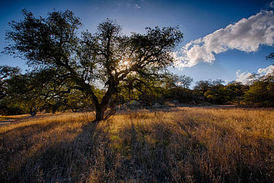 Evening Light Print by Peter Tellone