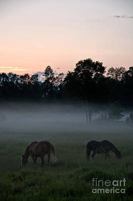 Photograph - Evening Mist by Cheryl Baxter