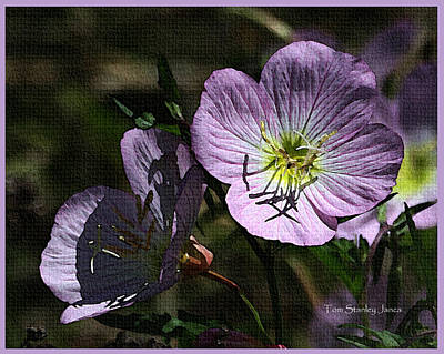 Evening Primrose Art Print by Tom Janca