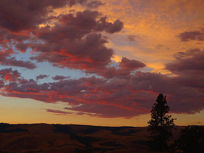 Photograph - Evening Sentinal by Jacqueline  DiAnne Wasson