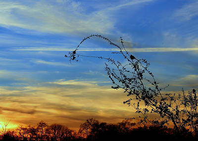Photograph - Evening Sky by Rima Biswas