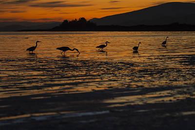 Photograph - Evening Sun by Windy Corduroy