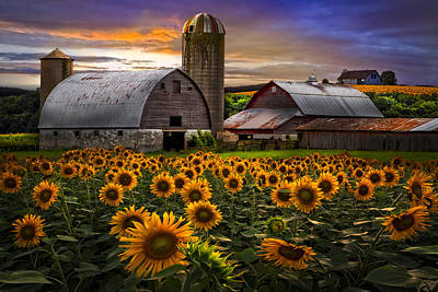 Silos Photograph - Evening Sunflowers by Debra and Dave Vanderlaan