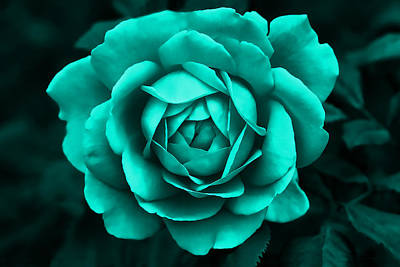 Photograph - Evening Teal Rose Flower by Jennie Marie Schell